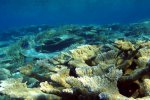 75_Awsome_reef_in_Hagrandhoo_North-Gaafu