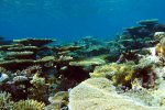 97_Healthy_coral_reef_in_Gaafu_Atoll