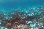 Chagos - May 2015 - witnessing coral bleaching and dying