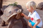 24_You_are_even_allowed_to_pet_the_tortoises
