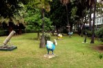 15_A_park_with_statues_of_Dodo_birds_in_the_middle_of_the_city
