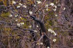 20_A_baobab_full_with_flowers