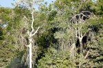 07_There_are_big_mangrove_trees_where_the_birds_love_to_sit_on