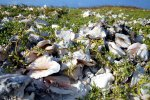 39_Dunes_made_out_of_Conch_shells