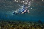 25_Paparazzi_under_water