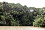 21_Wilderness_on_Lake_Gatun