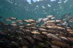 08_Lots_of_fish_on_Playa_Loberia