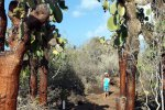 59_Opuntia_Cactus_on_our_way_to_Playa_Perro