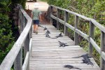 14_Lots_of_Marine_Iguanas_relaxing_in_the_sun_on_the_walkway_between_the_salt_and_brakish_lagoons