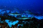 09_Sharks_patroling_the_reef_in_the_evening