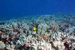 02_Coral_reef_at_Olowalu_or_turtle_reef