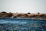 19_The_only_beach_of_the_island_is_full_with_sealions