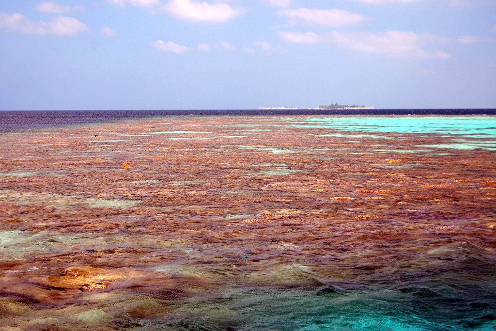 Coral reef in Ari atoll at low tide